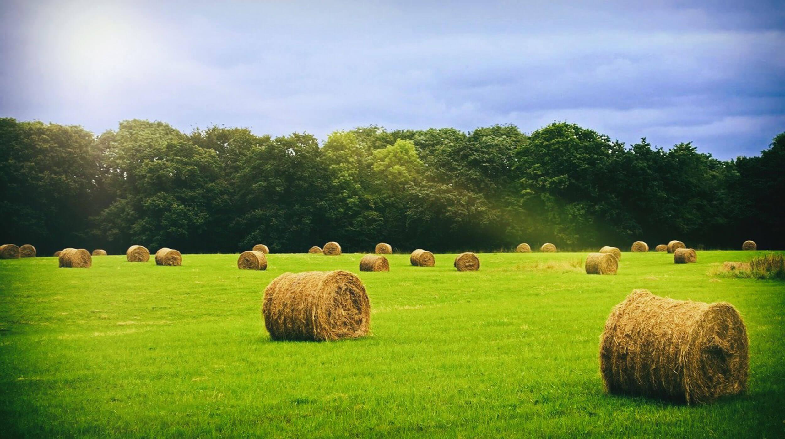 slider-hay